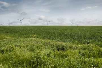 wind generators in wheat field