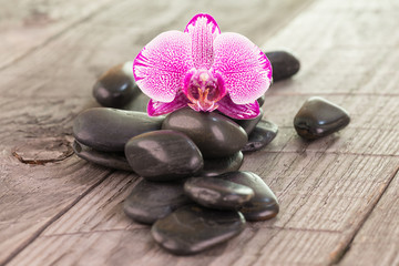Fuchsia Moth orchid and black stones