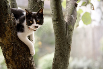 Black white kitten hanging on tree