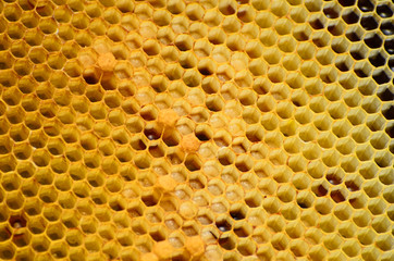Abstract honeycomb pattern with honney forms