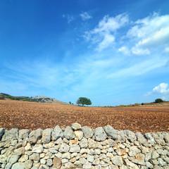 Albero di quercia solitario -muro di pietra