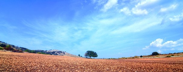 Albero di quercia solitario su un terreno arido