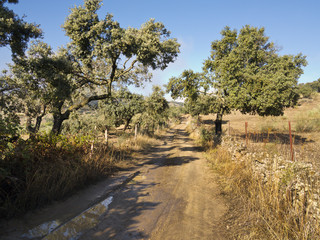 Camino de las Juntas en Valverde de Burgillos. Badaoz