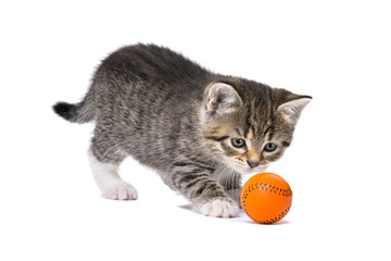 little tabby kitten playing with a little orange ball