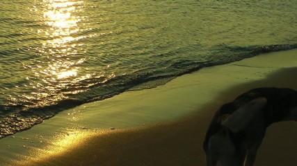 Dogs near the Beach