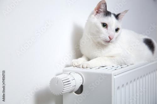 Katze liegt auf der heizung  - 74136753