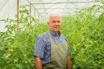 Farmer in a greenhouse