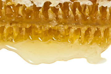 Honey comb on a white background. Health Benefits
