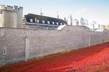LONDON TOWER  Ceramic poppies installation