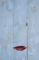 Surrealistic lips on wooden blue background.