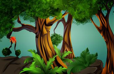 landscape - tropical forest (jungle)