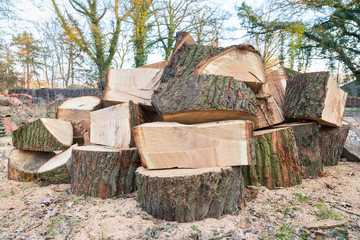 Big oak tree trunks sawn in parts