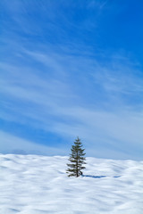 one spruce tree on snowy hill
