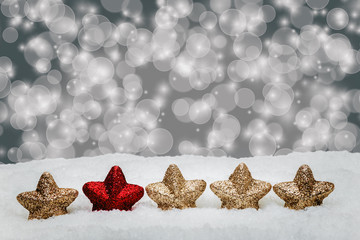 Weihnachtssterne im Schnee vor festlichem Hintergrund
