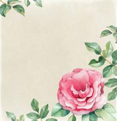 Watercolor illustration of rose flower