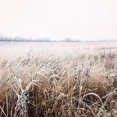 зимнее поле и трава