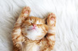 Red kitten - 74159556