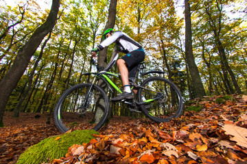 Mountain biker in forest.