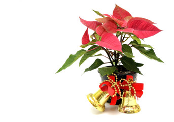 Poinsettia and christmas ornaments