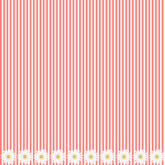 Pink stripe background with daisy flowers, vector image