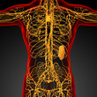Постер, плакат: 3d render medical illustration of the lymphatic system