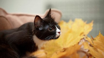Black cat and autumn leaves