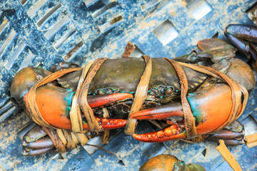 fresh serrated mud crab black in seafood market