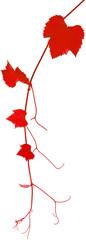 pampre et feuilles de vigne rouge
