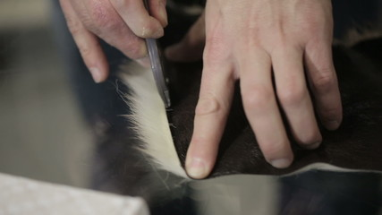 Man sews clothes. He cut a piece of skin with fur. Close up