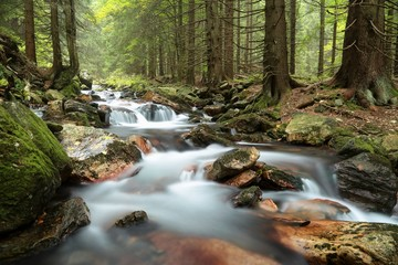 Stream flowing through the forest from the mountain slope