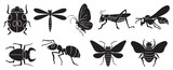 Fototapety A group of insects