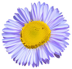 A big flower
