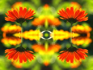 Ringelblumenmuster