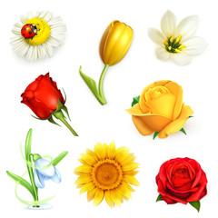 Flowers, set vector