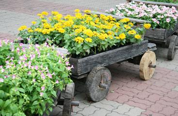 Flowers on pots in wooden box in garden