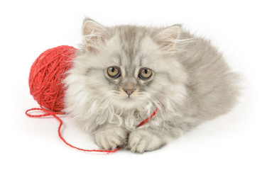 fluffy longhair kitten with red clew
