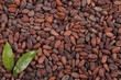 cocoa beans background with leaf - 74184106