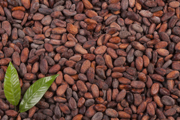 cocoa beans background with leaf