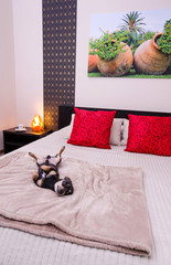 Bedroom interior with pinscher dog (photo from my gallery)