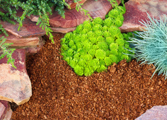 Decorative flower bed mulched with larch tree bark