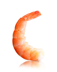 Cooked shrimp isolated
