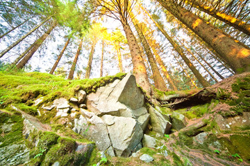 Sunny forest, wide-angle photo
