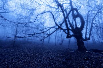horror tree at night