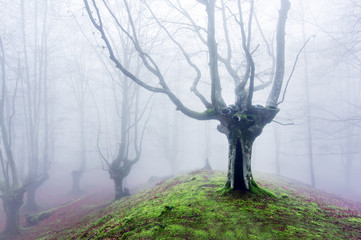 magical forest with fog