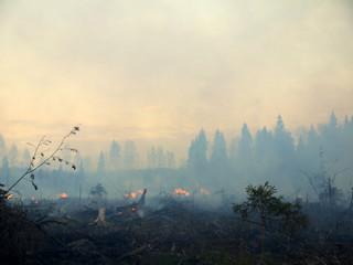 wildfire 006