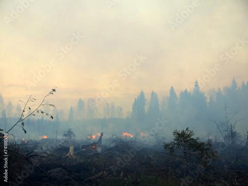 In de dag Vuur / Vlam wildfire 006