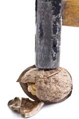 Broken walnut with hammer
