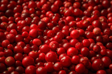 red bilberries shot as background with shallow dof
