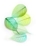 Macro green leaves - 74190722