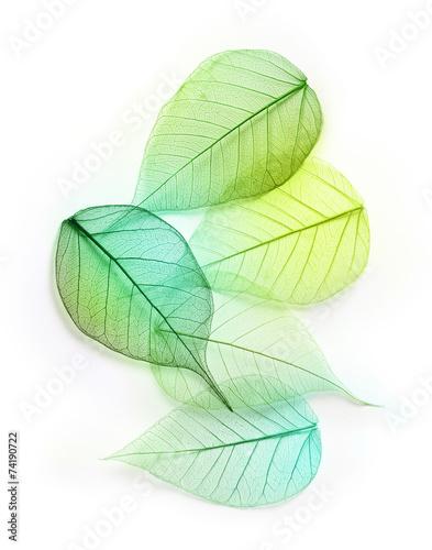 fototapeta na ścianę Makro zielone liście